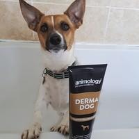 Animology Animology Derma Dog duftfreies Shampoo