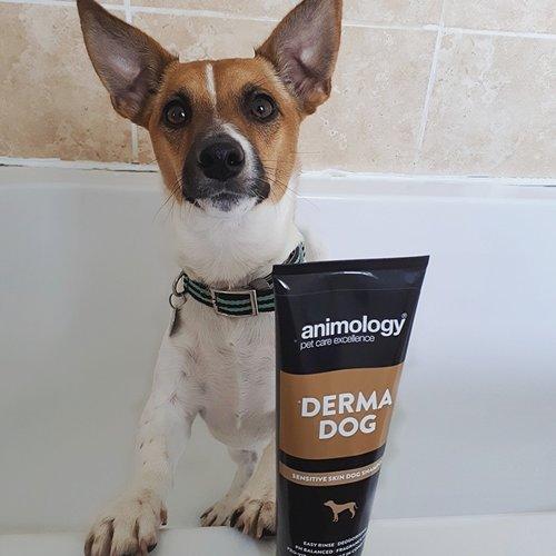 Animology Animology Derma Dog Shampoo