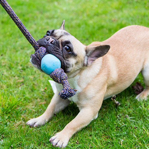 Beco Pets Beco Ball with Rope