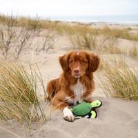 Beco Pets Beco Plush Toy - Tommy de Schildkröte