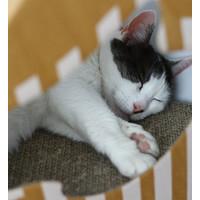 myKotty myKotty MIA Doppelseitiges Katzenhaus