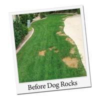 Dogrocks Dog Rocks