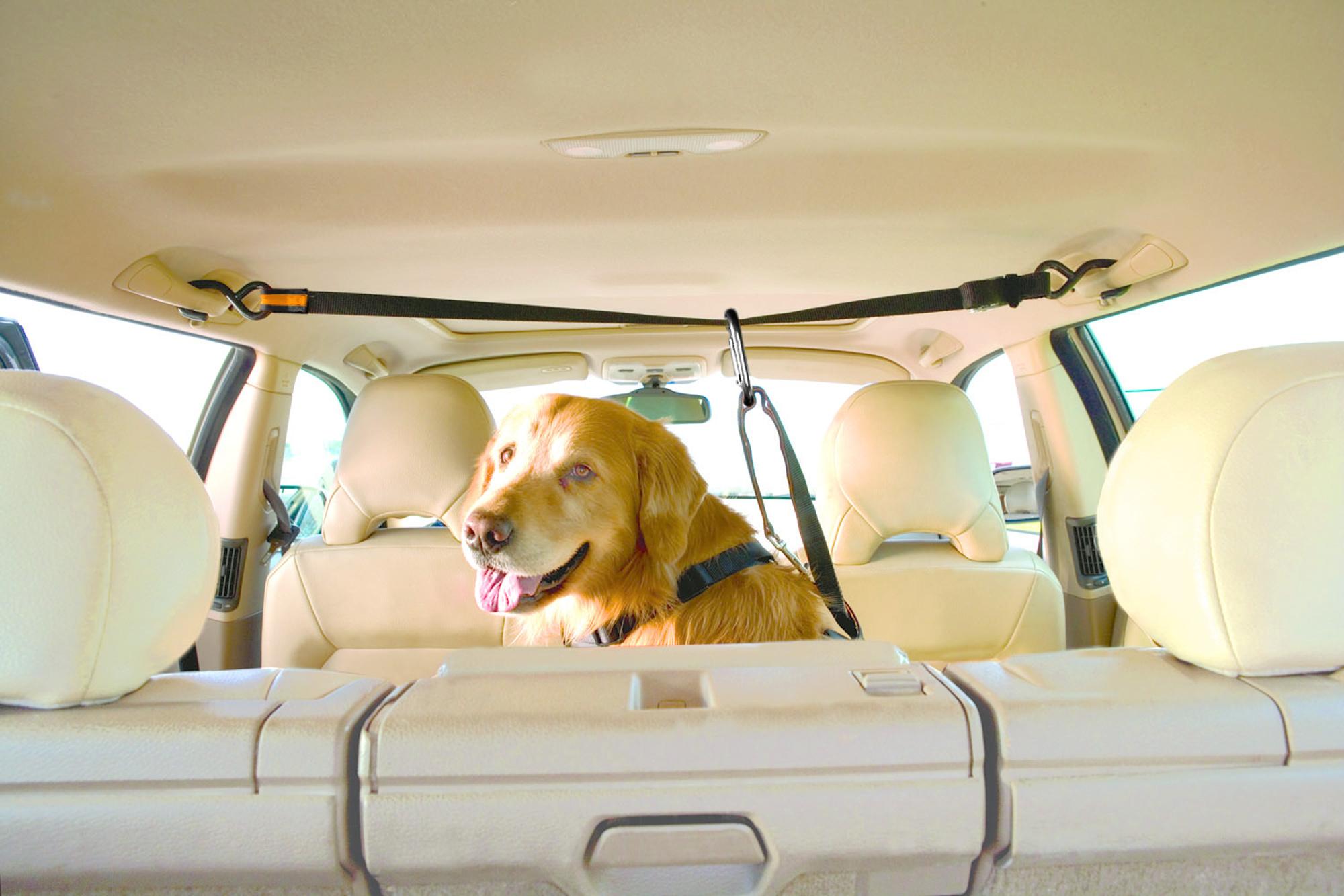 Pleasing Kurgo Kurgo Auto Zip Line For Dogs Unemploymentrelief Wooden Chair Designs For Living Room Unemploymentrelieforg