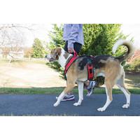 Easy Walk® EasySport Harness