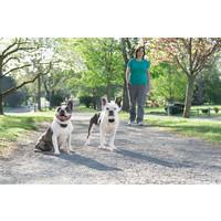 PetSafe® PetSafe® Ferntrainer 300M