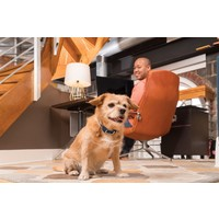 PetSafe® PetSafe® Remote Trainer 100M
