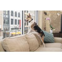 PetSafe® PetSafe® Wiederaufladbare Bellkontrolle