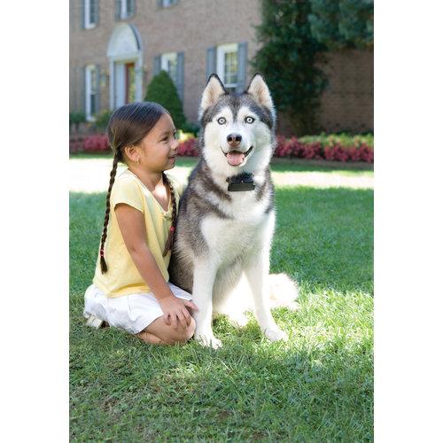 PetSafe® Petsafe® Umzäunungssystem für dickköpfige Hunde