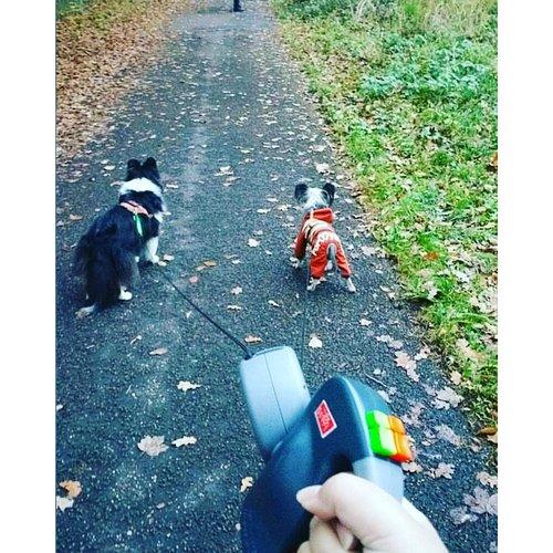 Wigzi Wigzi Dual Doggie 2.0 - Grau