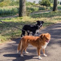 Rebel Petz Rebel Petz Adjustable Double Dog Leash