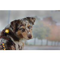 Orbiloc Orbiloc Dog Dual