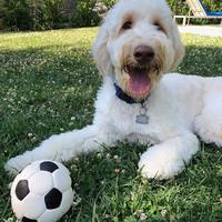 Lanco Lanco Soccer Ball Medium