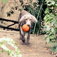 Lanco Lanco Basketbal Large