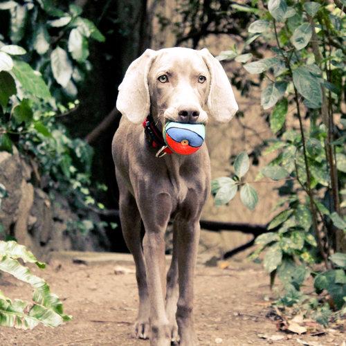 Lanco Lanco Regenboog Ball