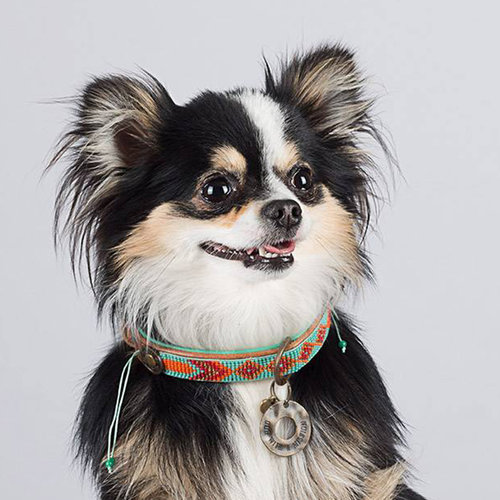 Dog With A Mission DWAM Paddy Lee Collar