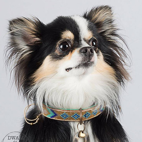 Dog With A Mission DWAM Indi Moon Halsband