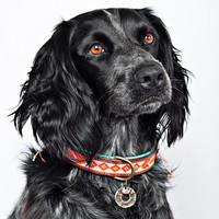 Dog With A Mission DWAM Sweet Mae Collar