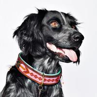 Dog With A Mission DWAM Sweet Mae Halsband