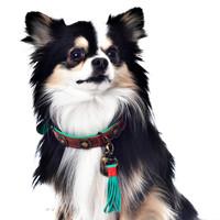 Dog With A Mission DWAM Urban Halsband