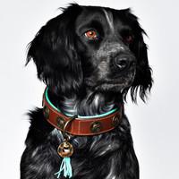 Dog With A Mission DWAM Urban Collar