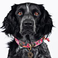 Dog With A Mission DWAM Boho Halsband