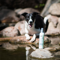 Greenfields Greenfields Trockenshampoo für Hunde 250 ml