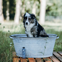 Greenfields Greenfields Dog Shampoo Black Coat 250 ml