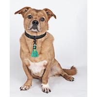 Dog With A Mission DWAM Boy Collar