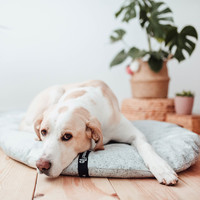 District 70 District 70 PEBBLE Dog Pillow