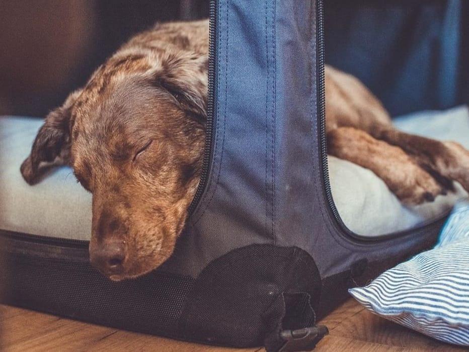 Waarom je een Soft Kennel nodig hebt!