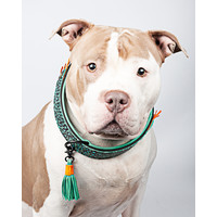 Dog With A Mission DWAM Blue Bird Collar