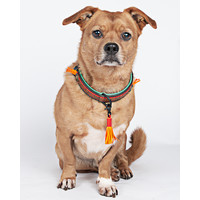 Dog With A Mission DWAM Red Robin Collar
