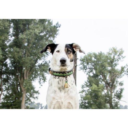 Dog With A Mission DWAM Montana Sky Collar