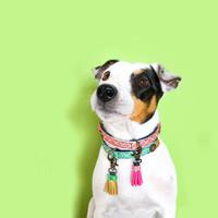 Dog With A Mission DWAM Sandy Moon Collar (Vegan)