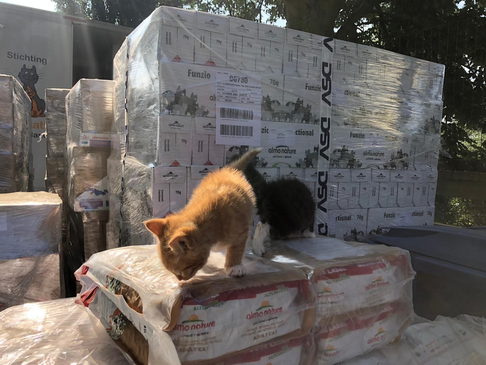 Fondazione Capellino en Almo Nature ondersteunen katopia, een mobiele operatiewagen voor het 'neutraliseren' van zwerfkatten