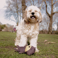 Beco Beco Plush Toy - Toby the Teddy