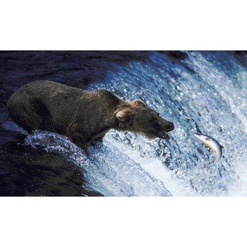 Grizzly  Grizzly Wilde Zalmolie