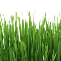 Gimpet GimCat Cat-Grass Maedow fragrance 150g