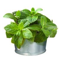 Gimpet GimCat Mint Tips 40g