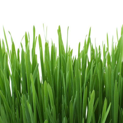 Gimpet GimCat Soft Gras 100g
