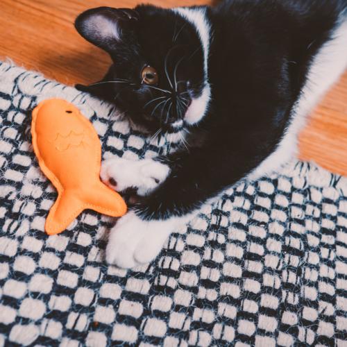 Beco Beco Plush Catnip Toy - Dolphin
