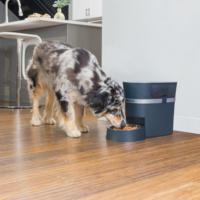 Drinkwell Petsafe® Smart Feed Automatic Pet Feeder