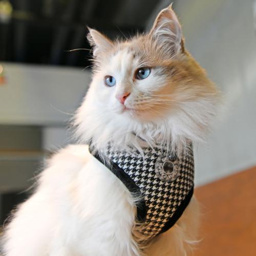 Puppia Catspia Cat Harness