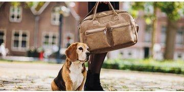 Beagles tassen