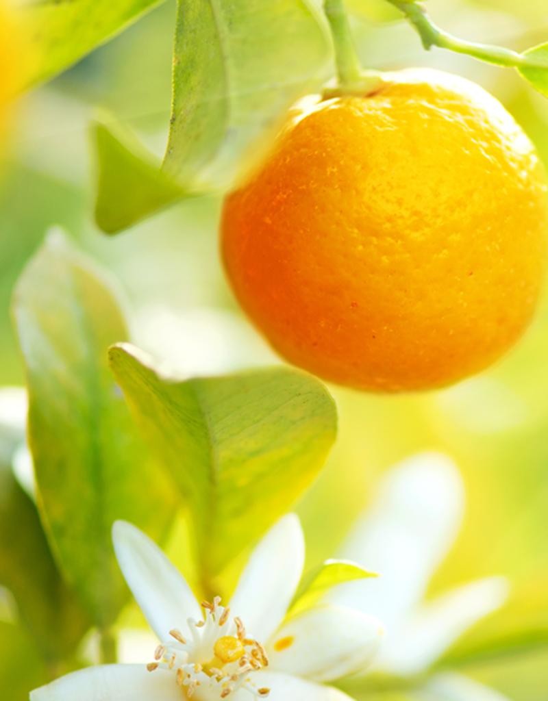 ELIXR Naturreines ätherisches Öl  - Orange