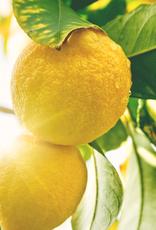 ELIXR Naturreines ätherisches Öl  - Lemon