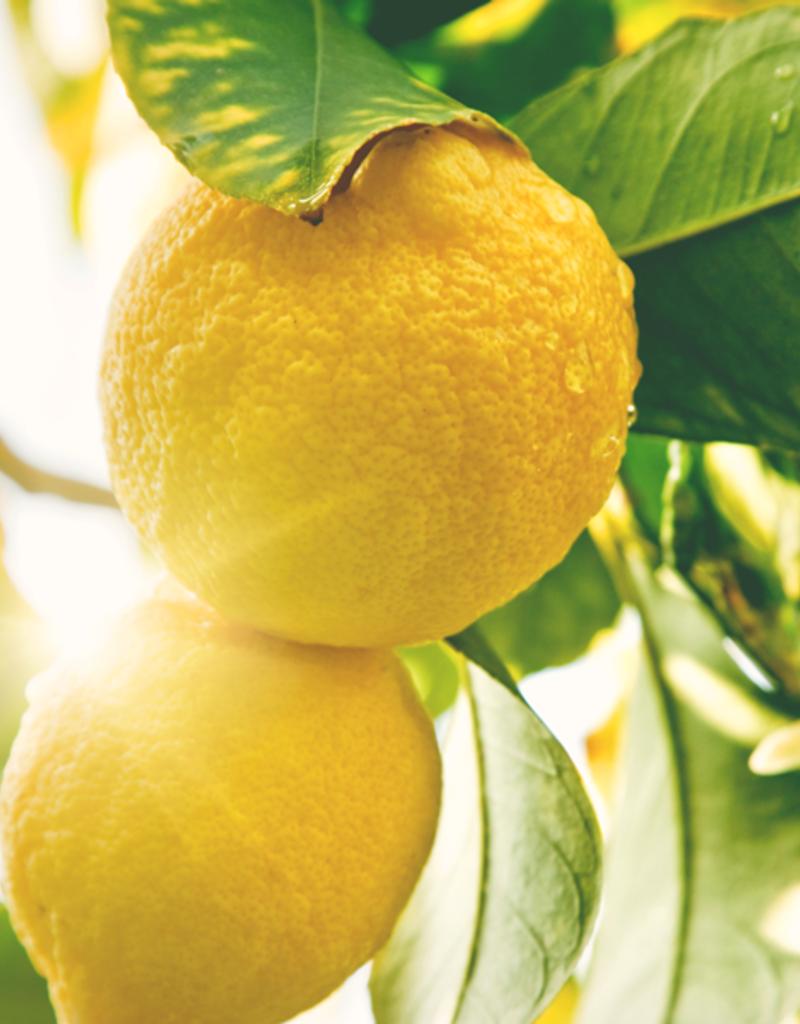 ELIXR Naturreines ätherisches Öl  - Zitrone