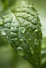 ELIXR Naturreines ätherisches Öl  - Pfefferminze