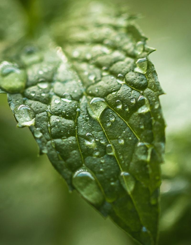 ELIXR Naturreines ätherisches Öl  - Peppermint