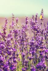 ELIXR Naturreines ätherisches Öl  - Lavendel